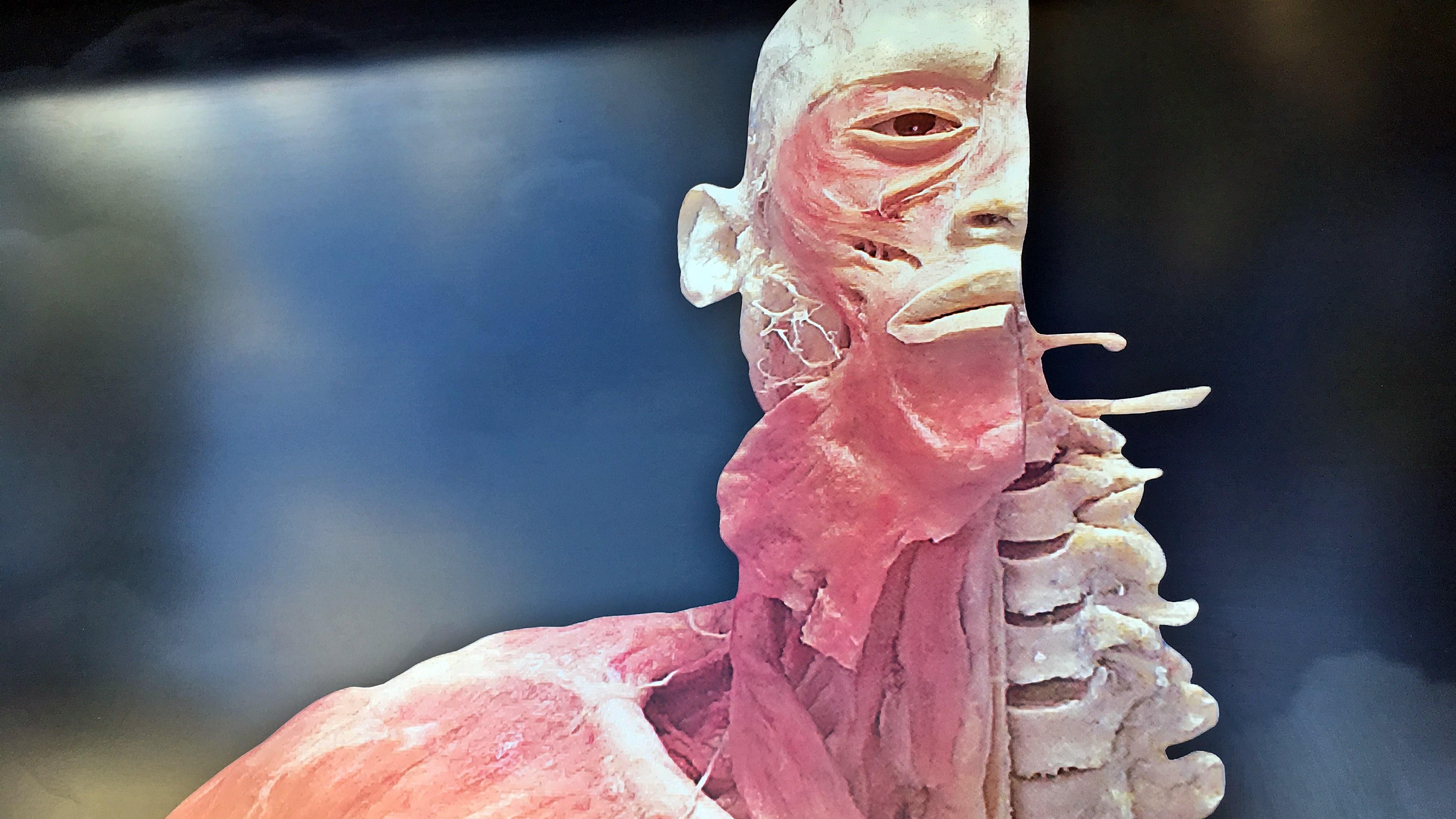 човешки тела изложба Австралия